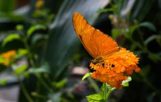 Butterfly Jungle #9