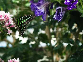 Butterfly Jungle #10