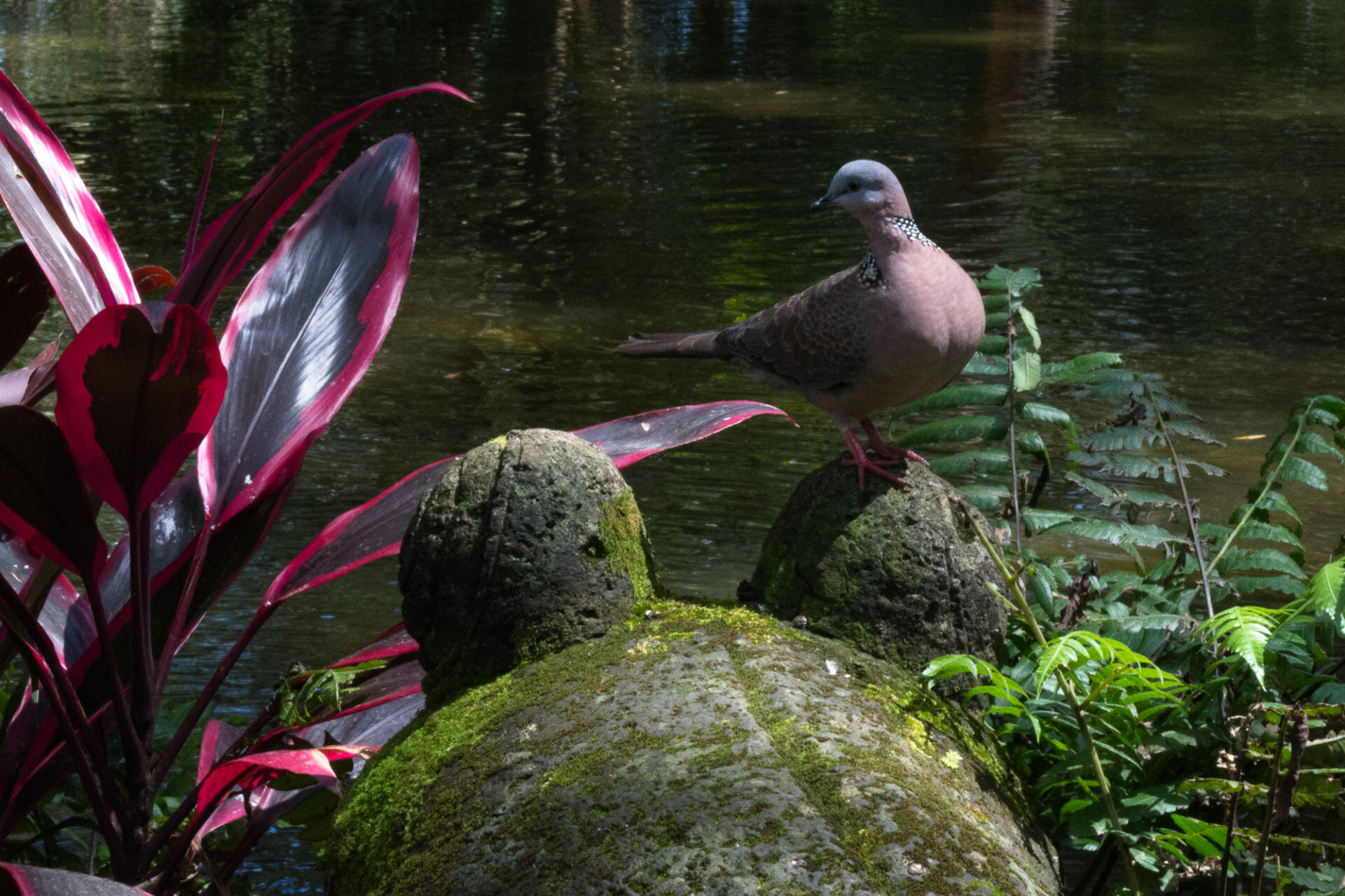 Even the birds find Byodo-In Temple serene