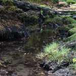Friday Fotos – Creek at Liliuokalani Park in Hilo