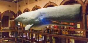 A whale of a good time at Bishop Museum
