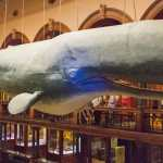 Friday Fotos – Whale of a good time at Bishop Museum