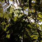 Friday Fotos – Along the trail at Akaka Falls