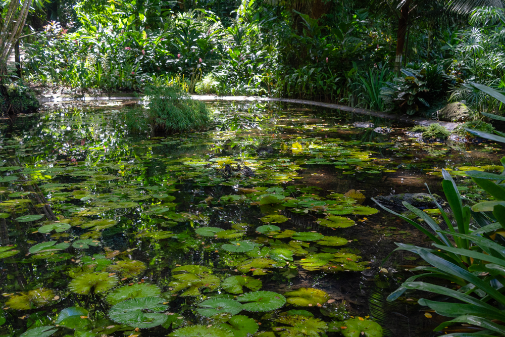 This pond in the shade was a welcome relief from the heat