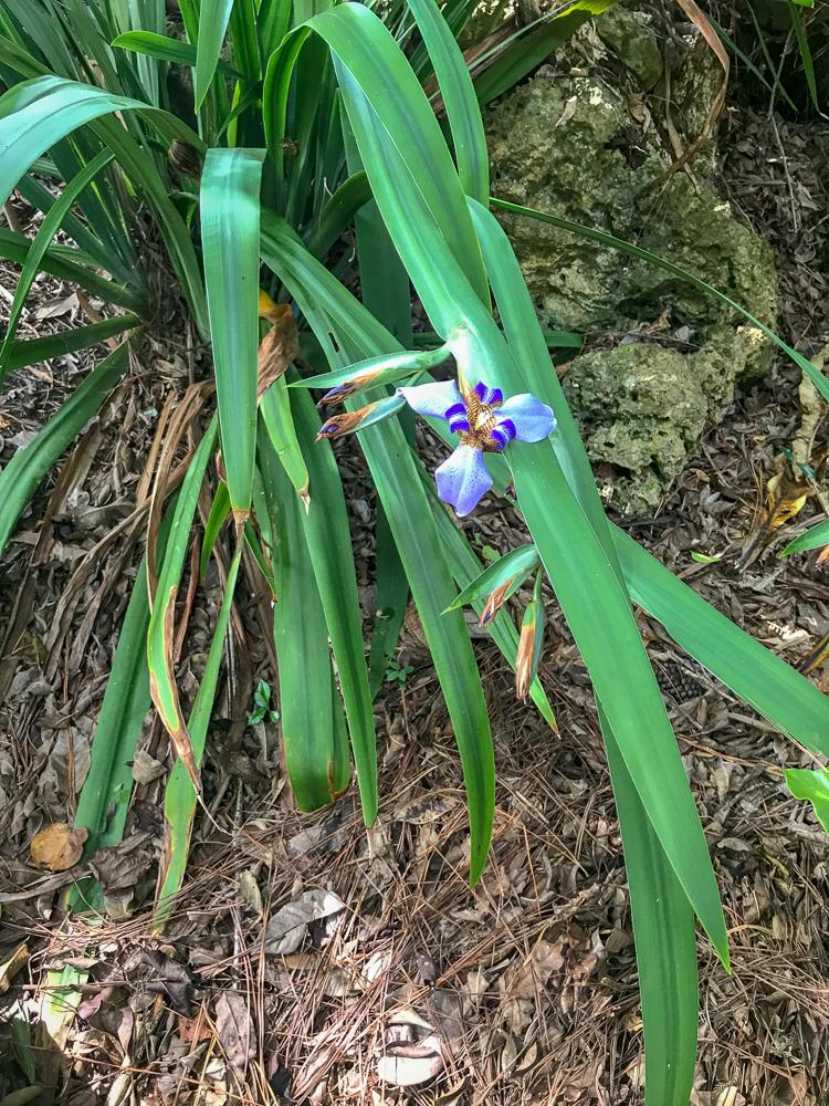 Botanic Gardens on Easo, Lifou