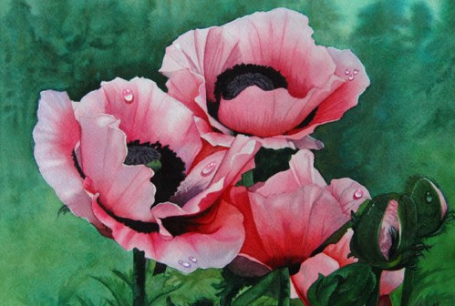 """""""Pink Poppies"""" 11 x 14 Watercolor on Arches"""