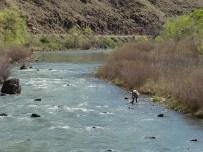 Nick Holmer landing brown trout on Owyhee River, Oregon.