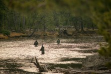 Fishing the Madison River, Yellowstone National Park
