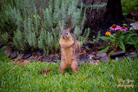 squirrel standing 900 047