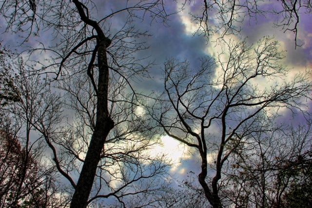 Dark skys bare trees silhouetted (640x427) (2)