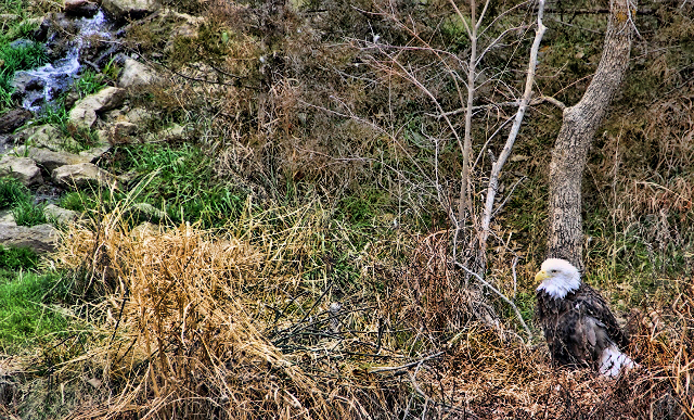 eagle ground waterfall (640x387) spicify