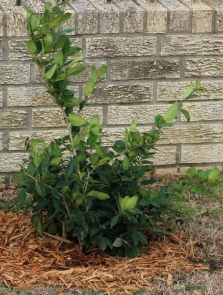new plants 001 (484x640)