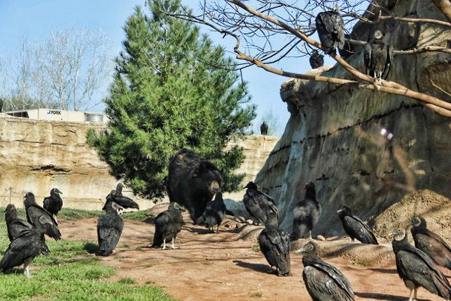 black bear coming toward us (640x427)