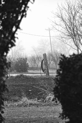 fog orchard bw crisp 400
