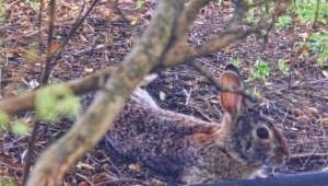 close up bunny (640x364)