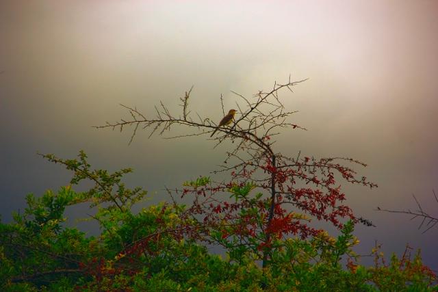 warning bird, fun colors (640x427)