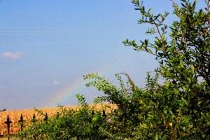 rainbow over the cornfields (640x427)