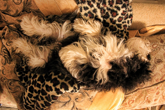 Tanner and Jaguar blanket (640x427) 4