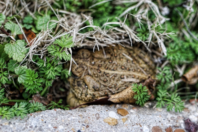 toad up close (640x427)