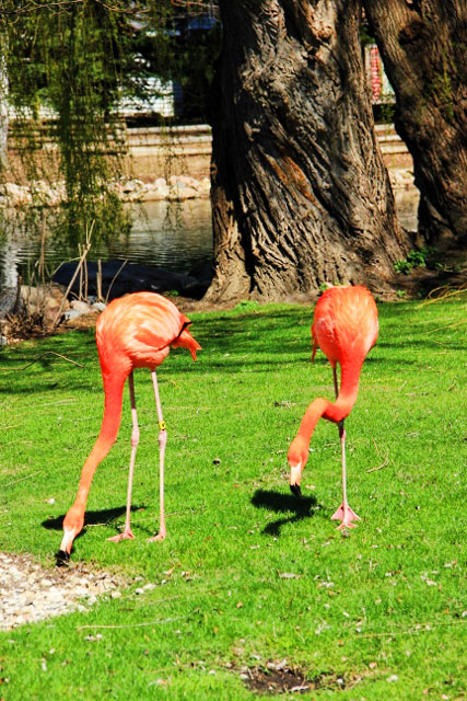 Flamingos and their shadows