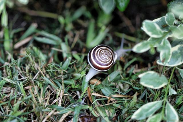 Snail's Beautiful Shell