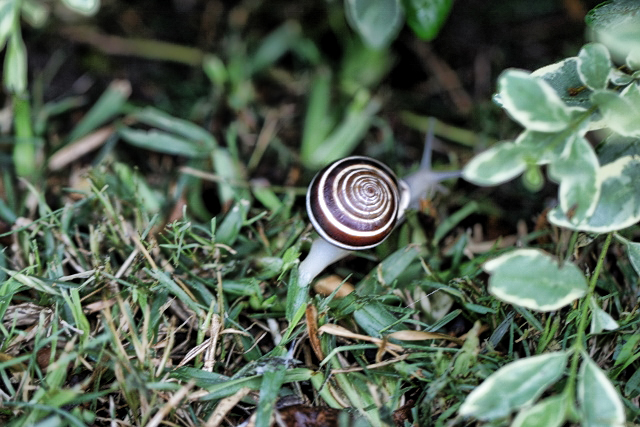 Snail's Beautiful Shell