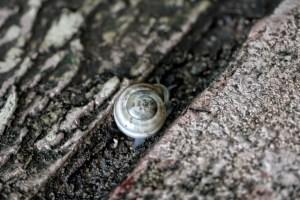 snail on the walk copy