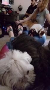 lap puppies (360x640)
