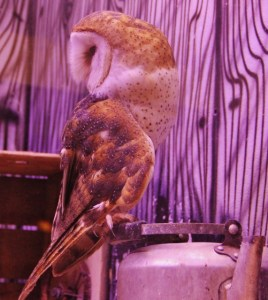 Owl (571x640) (2)