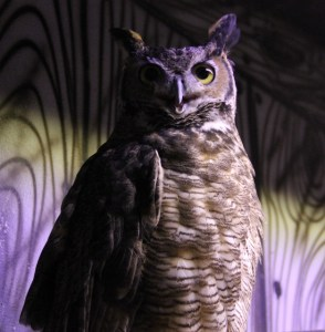 Owl Cameron Park Zoo (628x640) (2)