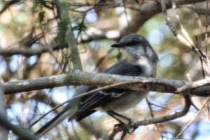 bird 015 (640x427)