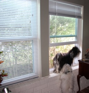 Opening a new window means a whole new outlook on life!