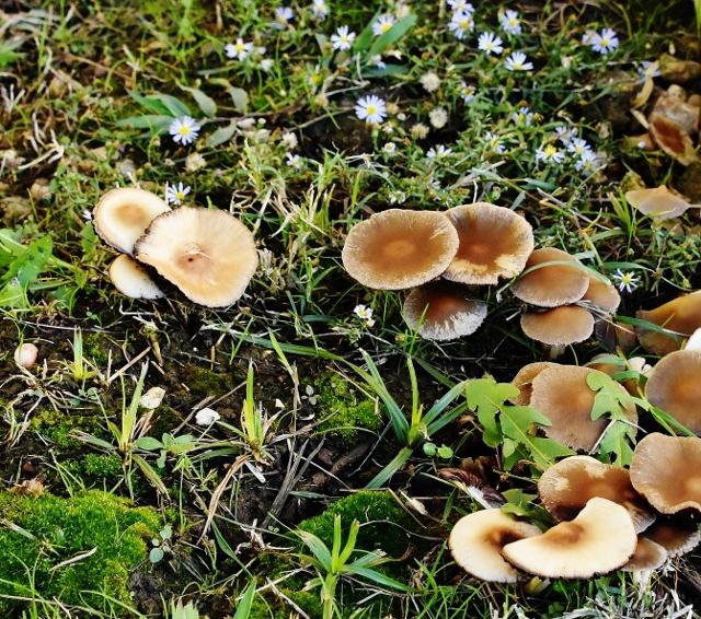 mushrooms, moss, flowers, a fairy garden 001 (640x566) (2)