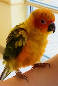 parrot baby (432x640)