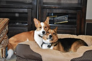 Corgi Love just the day before.