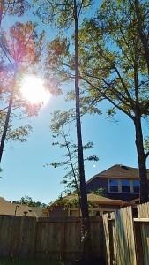 majestic pines (360x640)