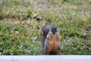 squirrel who me (640x427)