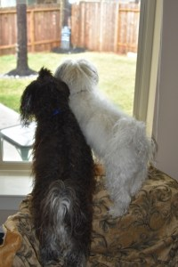 Max and Tanner and thd squirrels 018 (427x640)