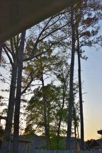 trees silhouette 001 (427x640) (2)