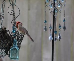 male cardinal feeding female (2) (640x527)