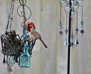 male cardinal feeding female (640x518)