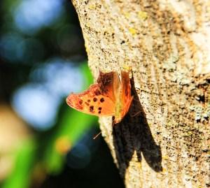 butterfly sideveiw (1024x919)