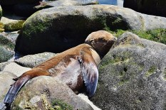 baby seal naptime (800x533)