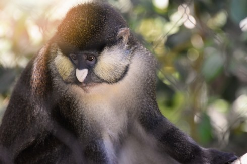 monkey looking down sunlight (1280x853)