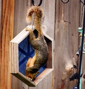 bad squirrel (771x800)