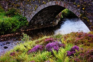 bridge and purple flowers 600x400