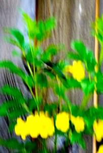 hummingbird on esperanza  (541x800)