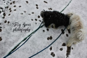 puppies and snow text (640x427)