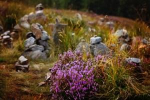 purple flowers ane cairns (800x533)
