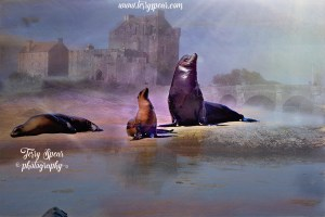 seal-momma-baby-another-sunrays-eilean-donan-combine-900